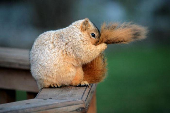 Silly-squirrel-I-Did-A-Funny-11