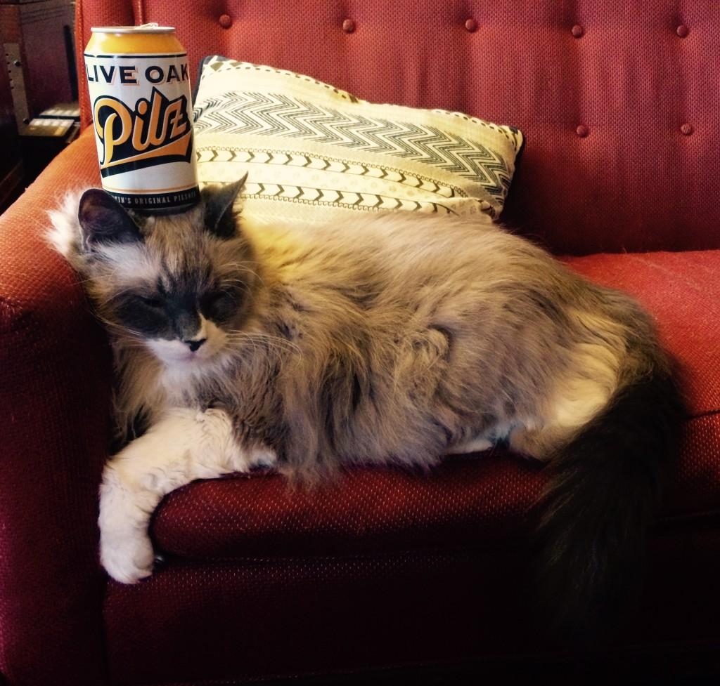 Pilz Cat